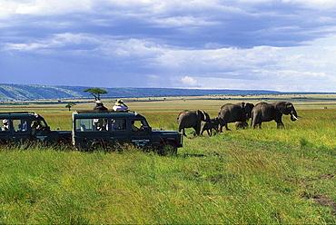 Elephant Safari tour with jeep, Kenya, Africa