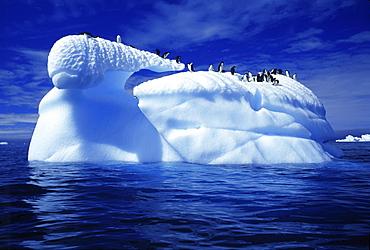 Adelie penguins on an iceberg, Paulet island, Antarctic peninsula, Antarctica