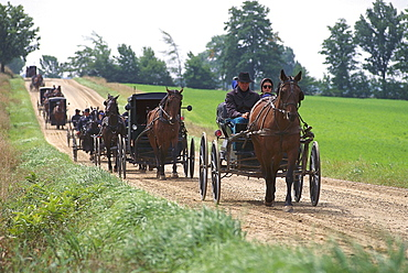 Coaches of Mennoniten, came from Worshirp, near St. Jacobs, Ontario, Canada, North America, America