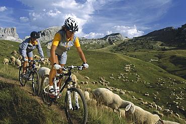 Mountainbikers, Passo Pordoi, Dolomites, Italy, Europe00057031
