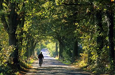 Europe, Germany, Mecklenburg-Western Pommerania, isle of Ruegen, tree alley near Zirkow