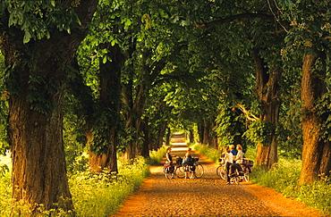 Europe, Germany, Mecklenburg-Western Pommerania, isle of Ruegen, avenue of trees near Lancken-Granitz