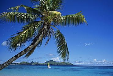 Coconut Tree and Hobie Cat, Tokoriki Island Resort, Tokoriki Island, Mamanuca Islands, Fiji