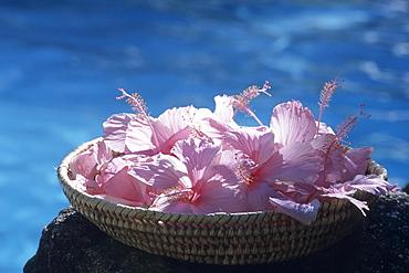 Hibiscus Basket, Tokoriki Island Resort, Tokoriki Island, Mamanuca Islands, Fiji