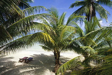 Coconut Trees and Beach Chairs, Rino's Beach Bungalows, Aitutaki, Cook Islands