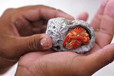 Holding Crab in Shell, Bora Bora, French Polynesia