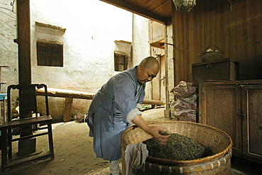 A nun drying tea leaves, nunnery at the village Minyuan, Jiuhua Shan, Anhui province, China, Asia