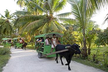 Tourist Transfer on Ox Carts, Union Plantation, La Digue Island, Seychelles