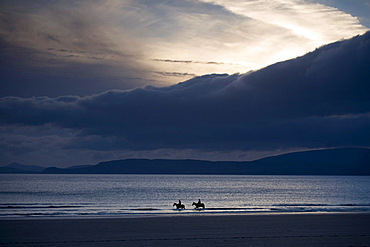 Two horses on Rossbeigh Beach in the evening light, Ring of Kerry, Ireland, Europe