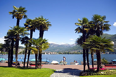 Palms growing at promenade of Lake Lugano, Ticino, Switzerland