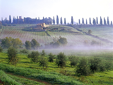 Country house, cypresses, olive trees near San Quirico d'Orcia, Val d¥Orcia, Tuscany, Italy