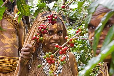 Girl working on coffee plantation, Langila, Highlands, Papua New Guinea, Oceania
