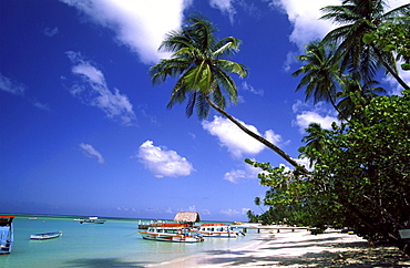 Tobago, Pigeon Point sunset, caribbean sea, palm tree