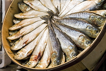 fresh sardines, Mercado Central, central market, Valencia, Spain