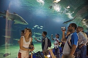 underwater tunnel, sharks, L'Oceanografic, Valencia, Spain