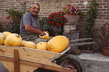 Farmer with pumkins, Chiusure bei Asciano, Tuscany, Italy