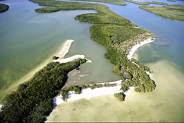 Aerial view of mangroves at Ten Thousand Islands National Wildlife Refuge, Florida, USA