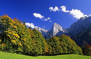alpine pasture with beeches in autumn colours, Wilder Kaiser, Kaiser range, Tyrol, Austria