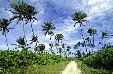 Road and coconut palms on Home Island, Australian
