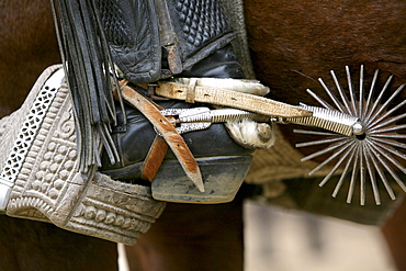 Cowboy boot with spur at a rodeo in Conchi, Chilou, Chile, South America