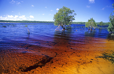 Tannin colours the waters of Lake Boomanjin brown, Fraser Island, Great Barrier Reef, Australia