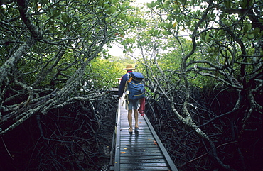 Man walking along the board walk at Missionary Bay, Hinchinbrook Island, Great Barrier Reef, Australia
