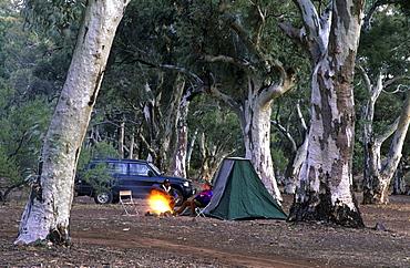 Camp under red river gums in Aroona Valley, Flinders Ranges, South Australia, Australia