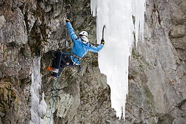 Iceclimbing in Pontresina, a man climbing a frozen waterfall, Pontresina, Grisons, Switzerland