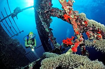 Scuba diver diving on Umbria shipwreck, Sudan, Africa, Red Sea, Wingate Reef