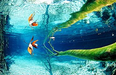 Water reflection, USA, Florida, FL, Crystal River