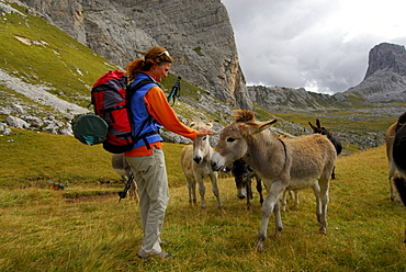 young woman with herd of donkeys, Forcella Giau, Alta Via delle Dolomiti No. 1, Dolomites, Cortina, Venezia, Italy