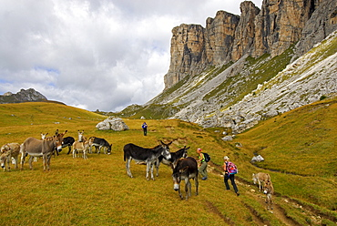 herd of donkeys with group of hikers, Forcella Giau, Alta Via delle Dolomiti No. 1, Dolomites, Cortina, Venezia, Italy