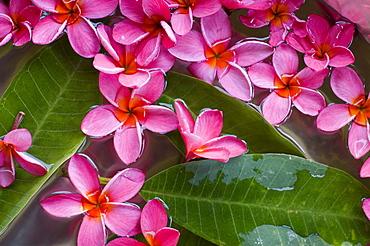 Flower decoration, Shanti Ananda Resort and Spa, Mauritius