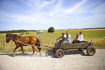 Horse cart in the Nemunas delta, Lithuania