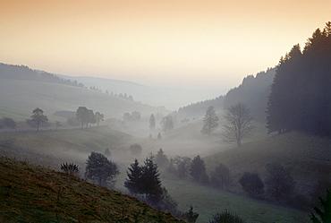 Morning mist near Urach, Black Forest, Baden-Wurttemberg, Germany