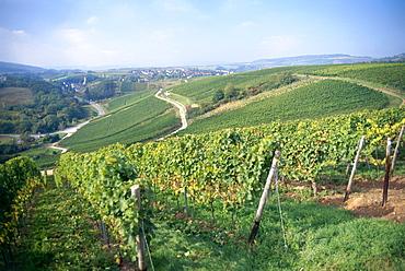 View over vineyards Dorsheimer Goldloch and Pittermannchen, Rummelsheim, Rhineland-Palatinate, Germany