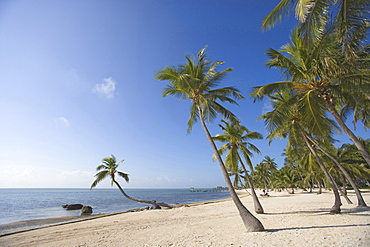 The Moorings Village (has to be mentioned in the caption, not available for commercial use), Islamorada, Florida, USA