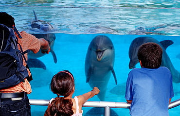 Spectators viewing bottle-nosed dolphins, Tursiops truncatus, USA, California, San Diego, SeaWorld