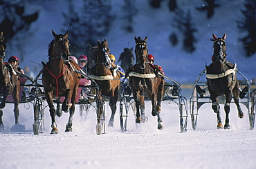 Horse race in the snow, St. Moritz, Europe
