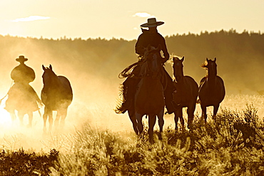 cowboys horseriding at sunset, Oregon, USA