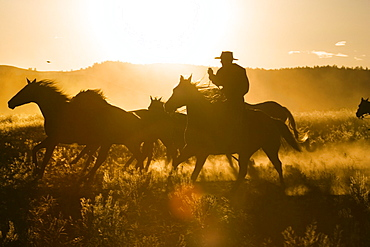 cowboy with horses at sunset, Oregon, USA