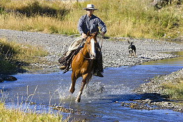 cowboy riding in water, Oregon, USA