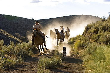 cowboys riding, Oregon, USA