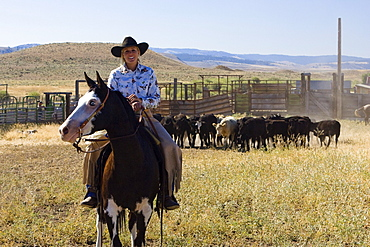 cowgirl with cattle, Oregon, USA