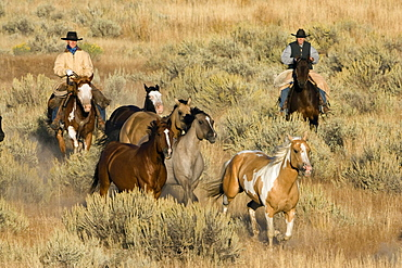 cowgirl and cowboy with horses, Oregon, USA