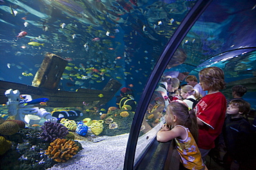Children Admiring Fish in Atlantis Aquarium Attraction, Legoland, Billund, Central Jutland, Denmark