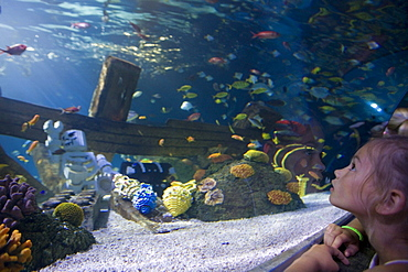 Girl admiring fishes in Atlantis Aquarium Attraction, Legoland, Billund, Central Jutland, Denmark