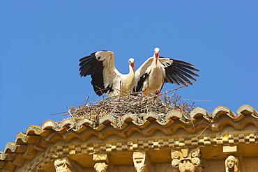 Storks on top of the church of San MartÌn, FrÛmista, Castilla Leon, Spain