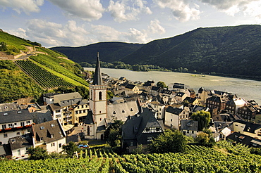 View of vineyards and river Rhine at Assmannshausen, Rheingau, Hesse, Germany