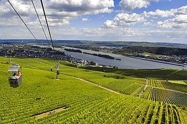Cable car over vineyards, Ruedesheim am Rhein, Rheingau, Hesse, Germany